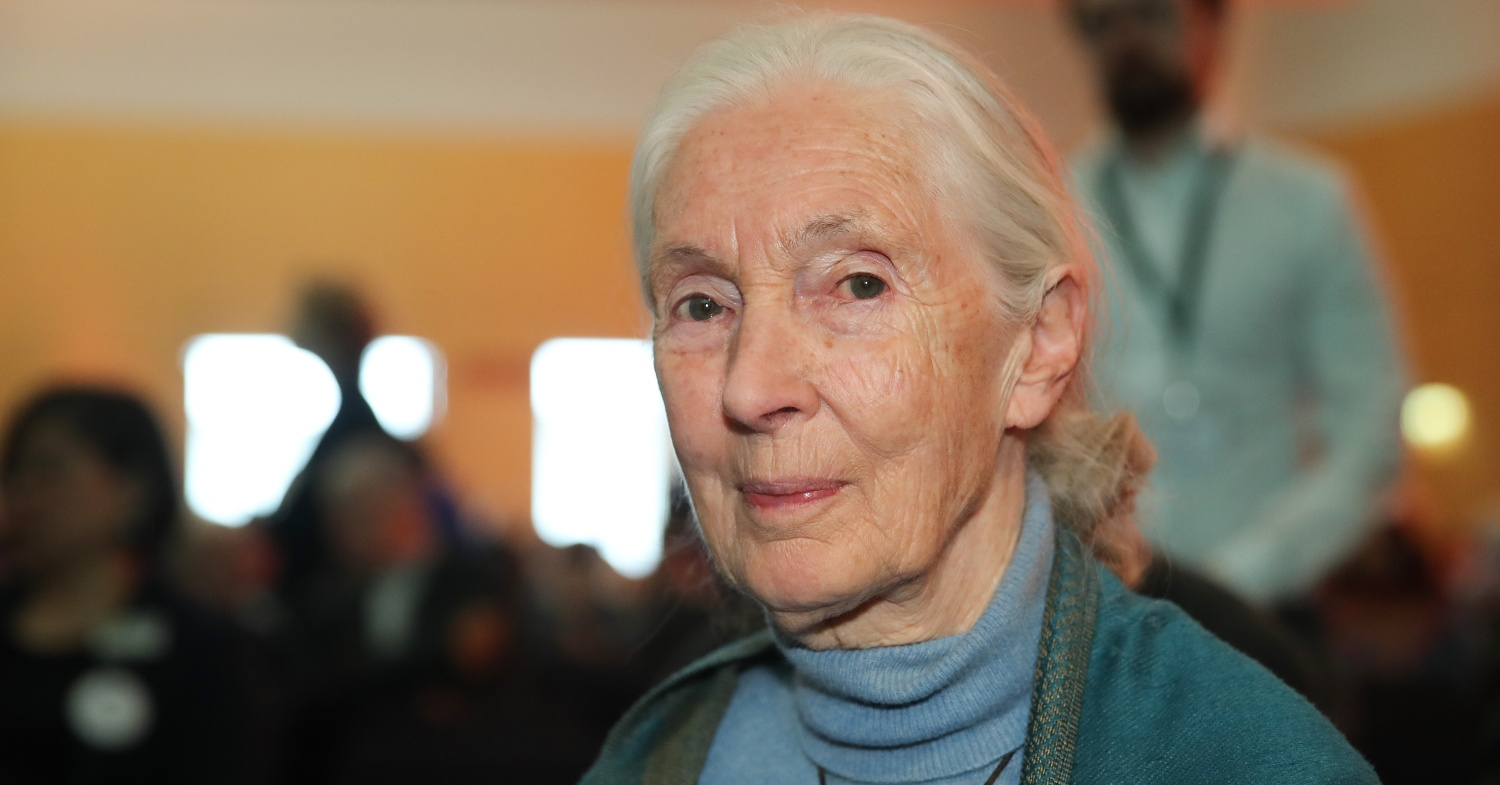 Hollywood Bowl Celebrates the Inspiring Vegetarian, Jane Goodall, Who 'Changed the Way We Think'