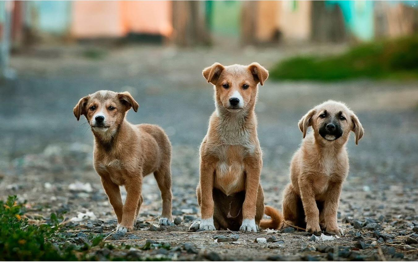 stray dogs-1351x849