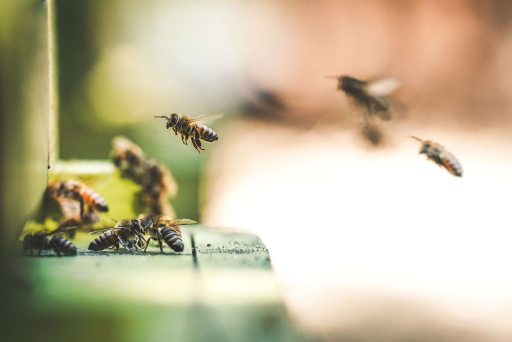 Biotech Startup Pioneers Formula to Help Save the Bees