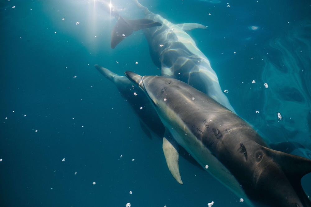 City of Barcelona Bans Exhibition and Breeding of Captive Dolphins