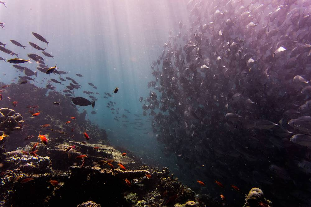 World's Largest Dead Zone Discovered in Arabian Sea