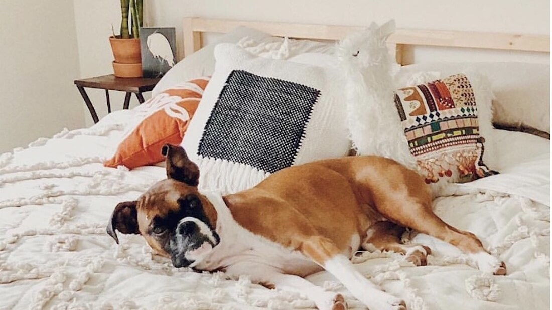 Anthropologie Bed with Dog Cropped