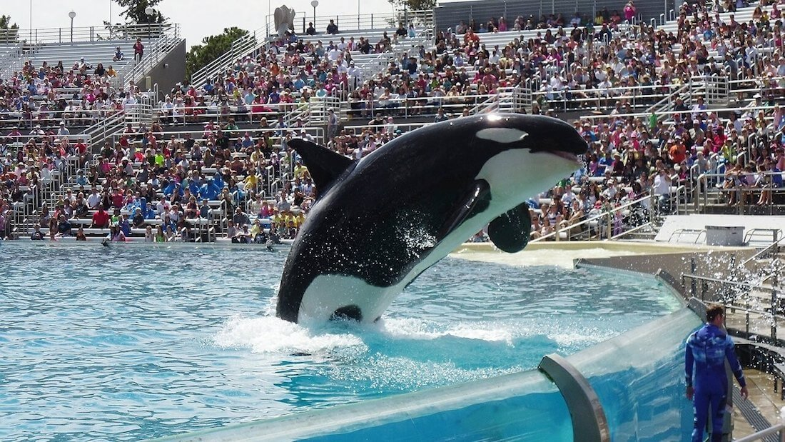 Travel Agency Thomas Cook Drops SeaWorld and Loro Parque Tickets