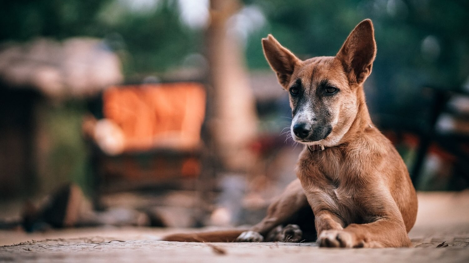 Nearly 1 Million South Koreans Want the Government to End the Dog Meat Trade For Good