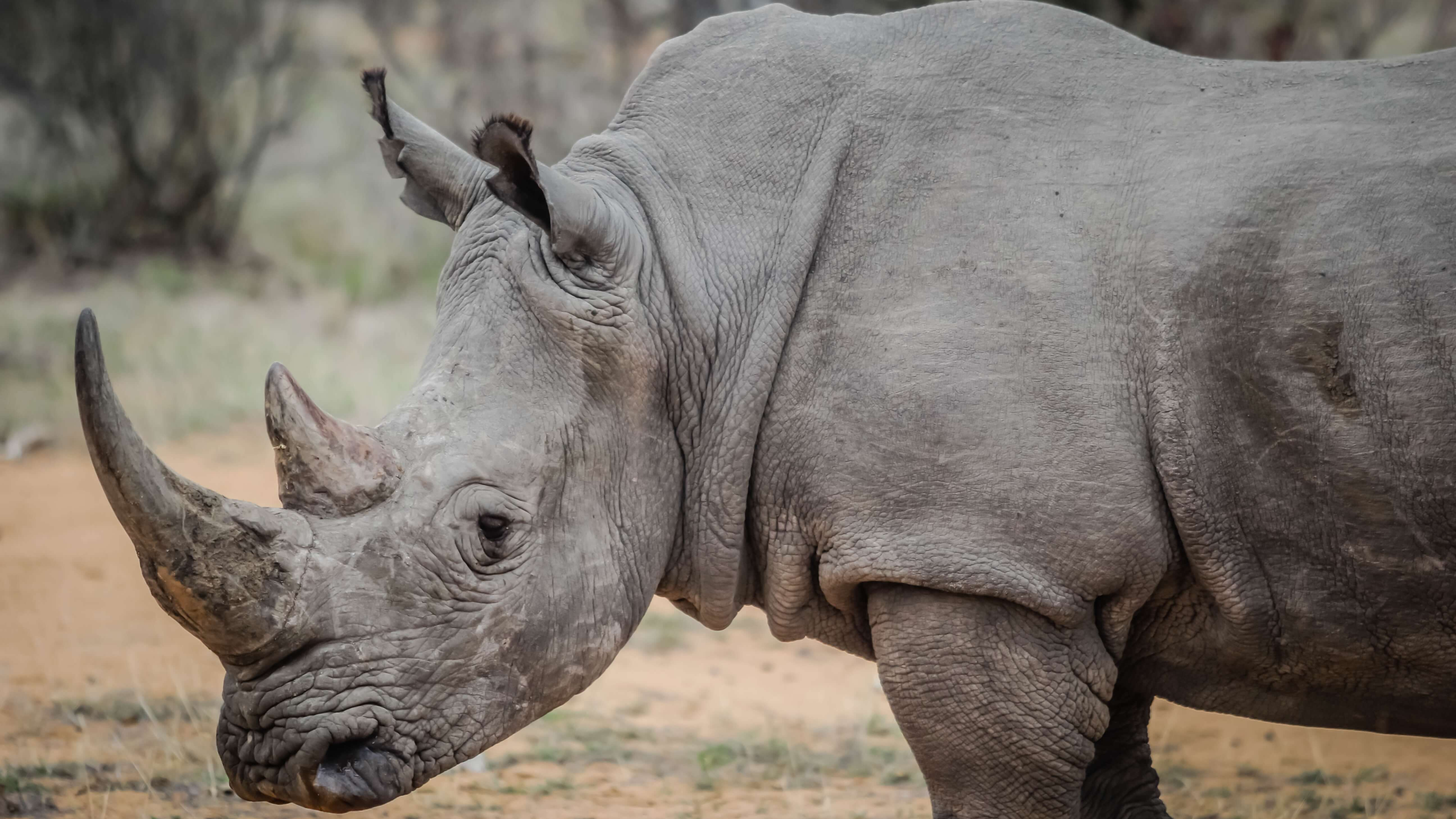 Illinois Becomes 9th State to Ban the Sale of Ivory and Rhinoceros Horns