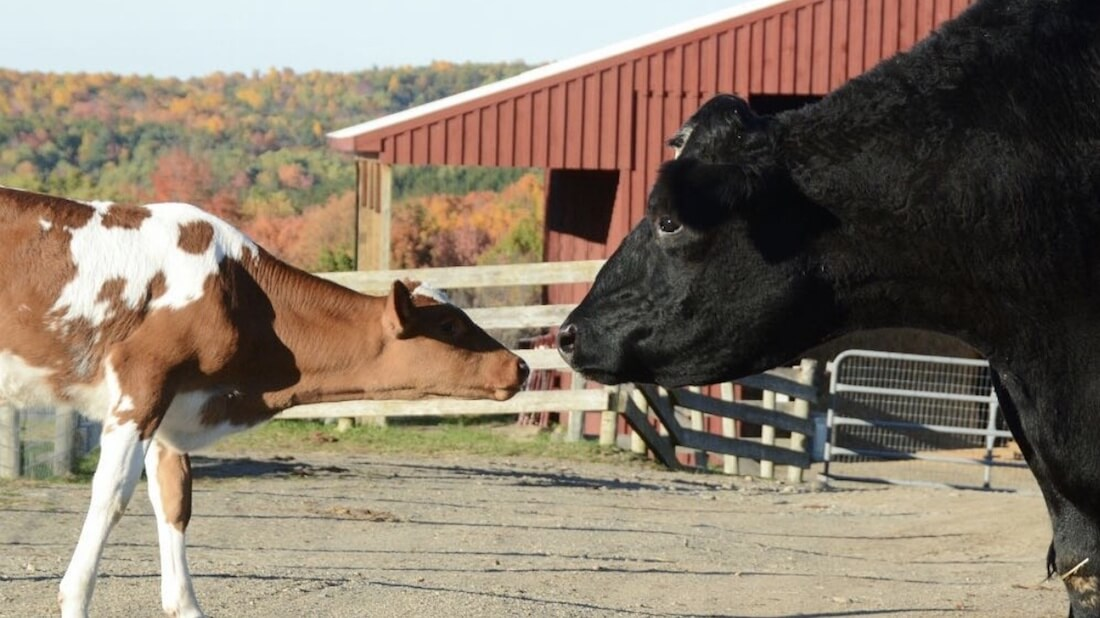 ASCPA Asks Consumers to 'Detox' and Say No to Factory Farm Products