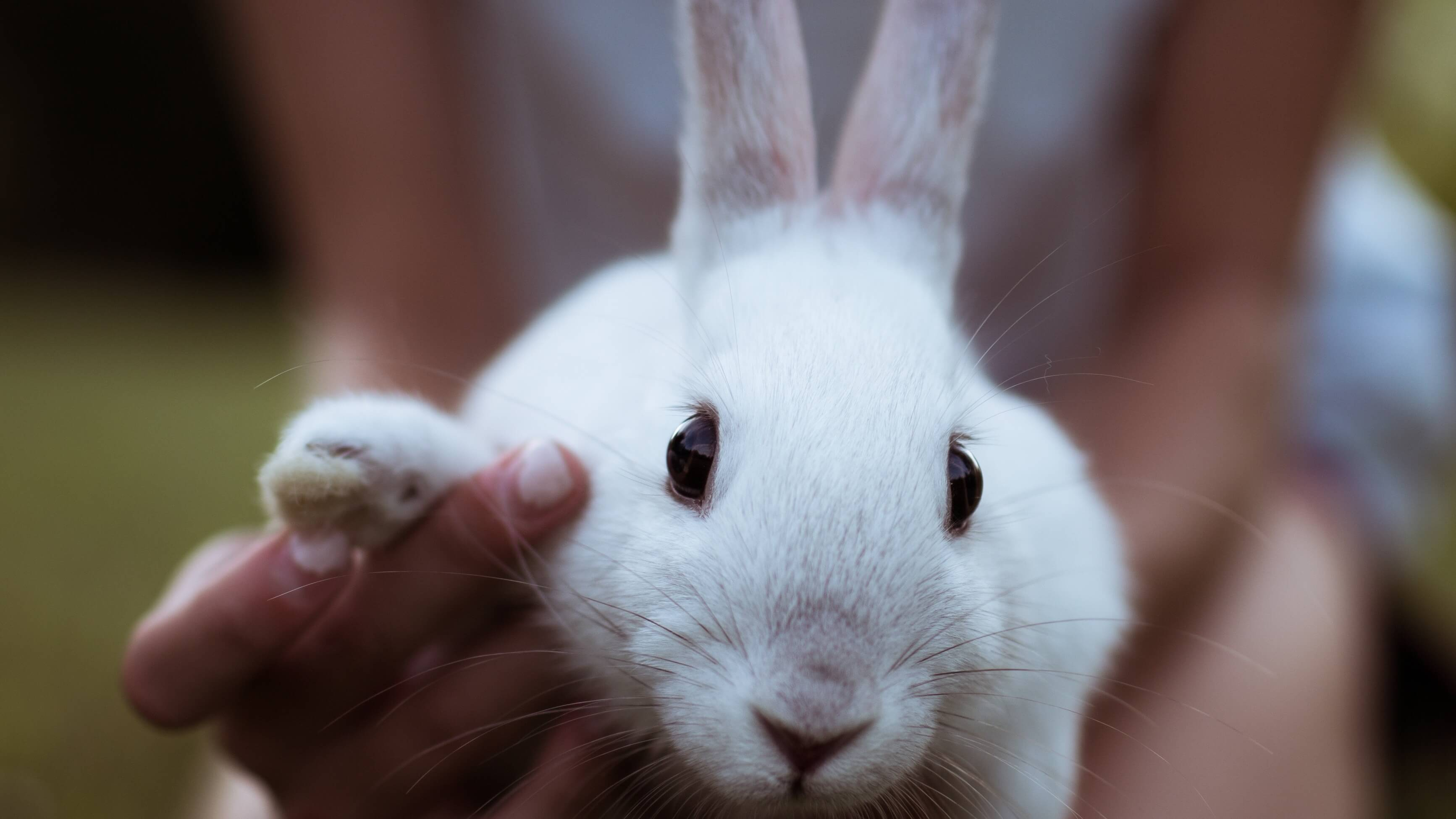 8.3 Million People Sign Anti-Animal Testing Petition Delivered to the UN