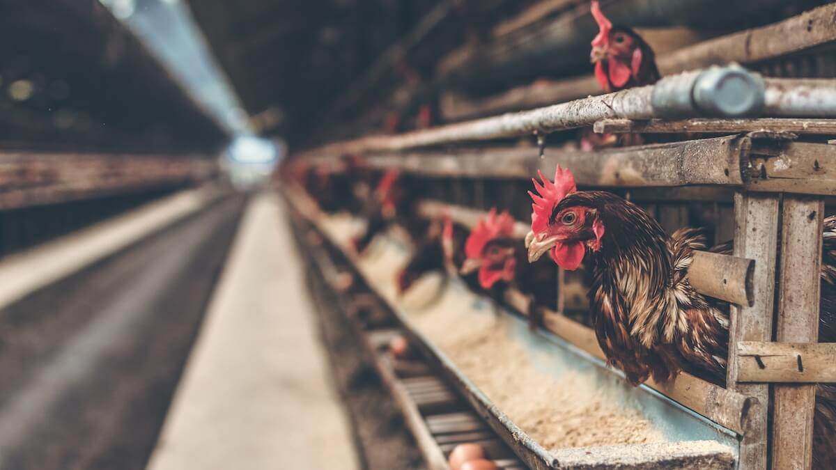 Vegan Private Equity Veteran and Founder of 'FAIRR' Jeremy Coller Wants to End Factory Farming Forever