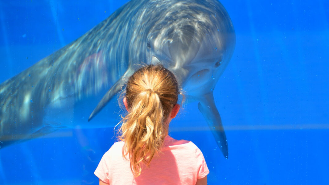 captivity of whales and dolphins