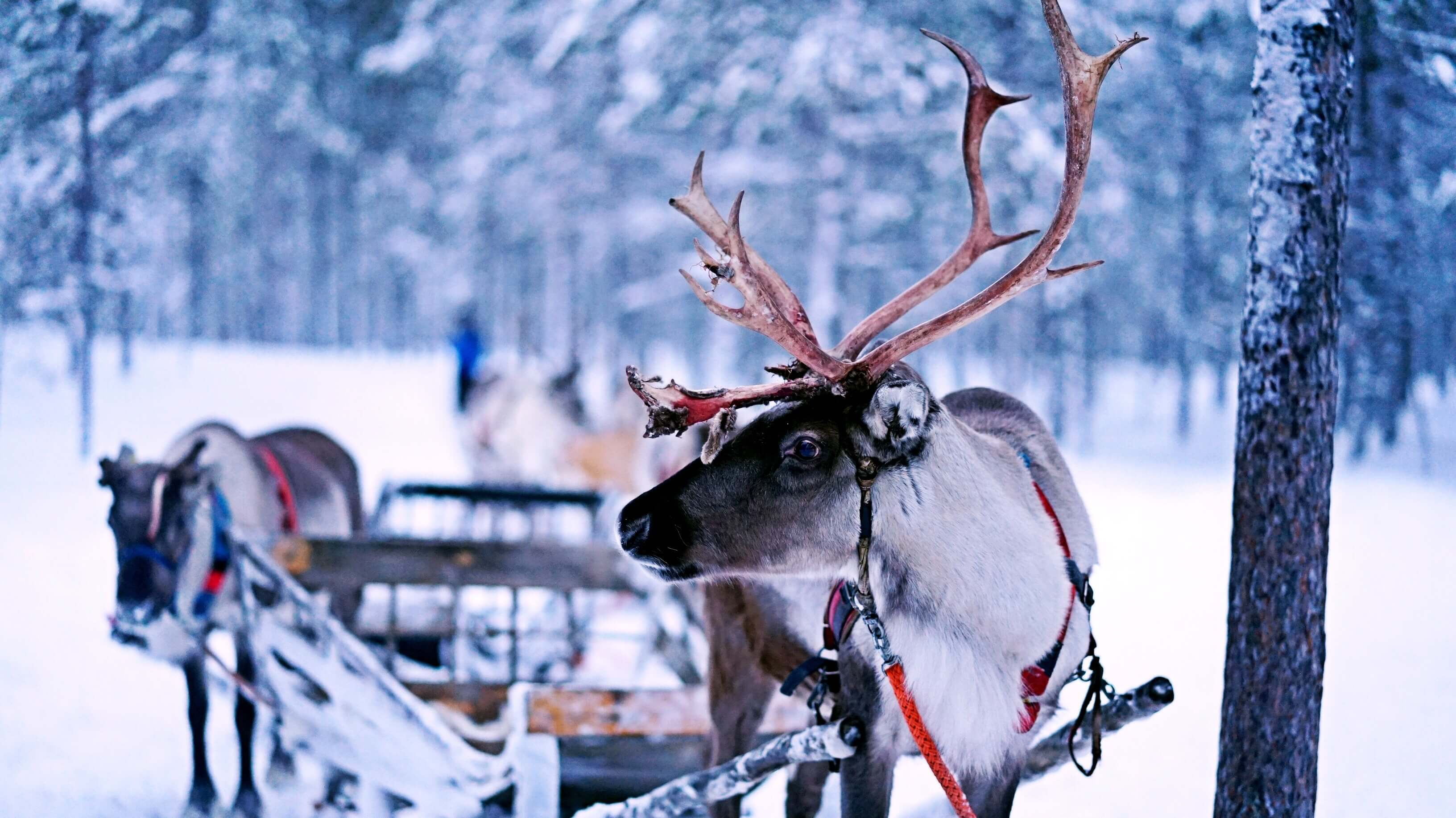 7 Alternative Festive Holiday Activities to Visiting Reindeer Centres