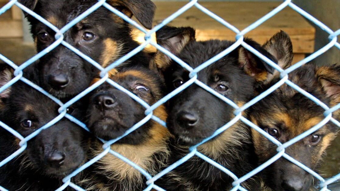 Eating Cats and Dogs to Be Made Illegal in All 50 U.S. States
