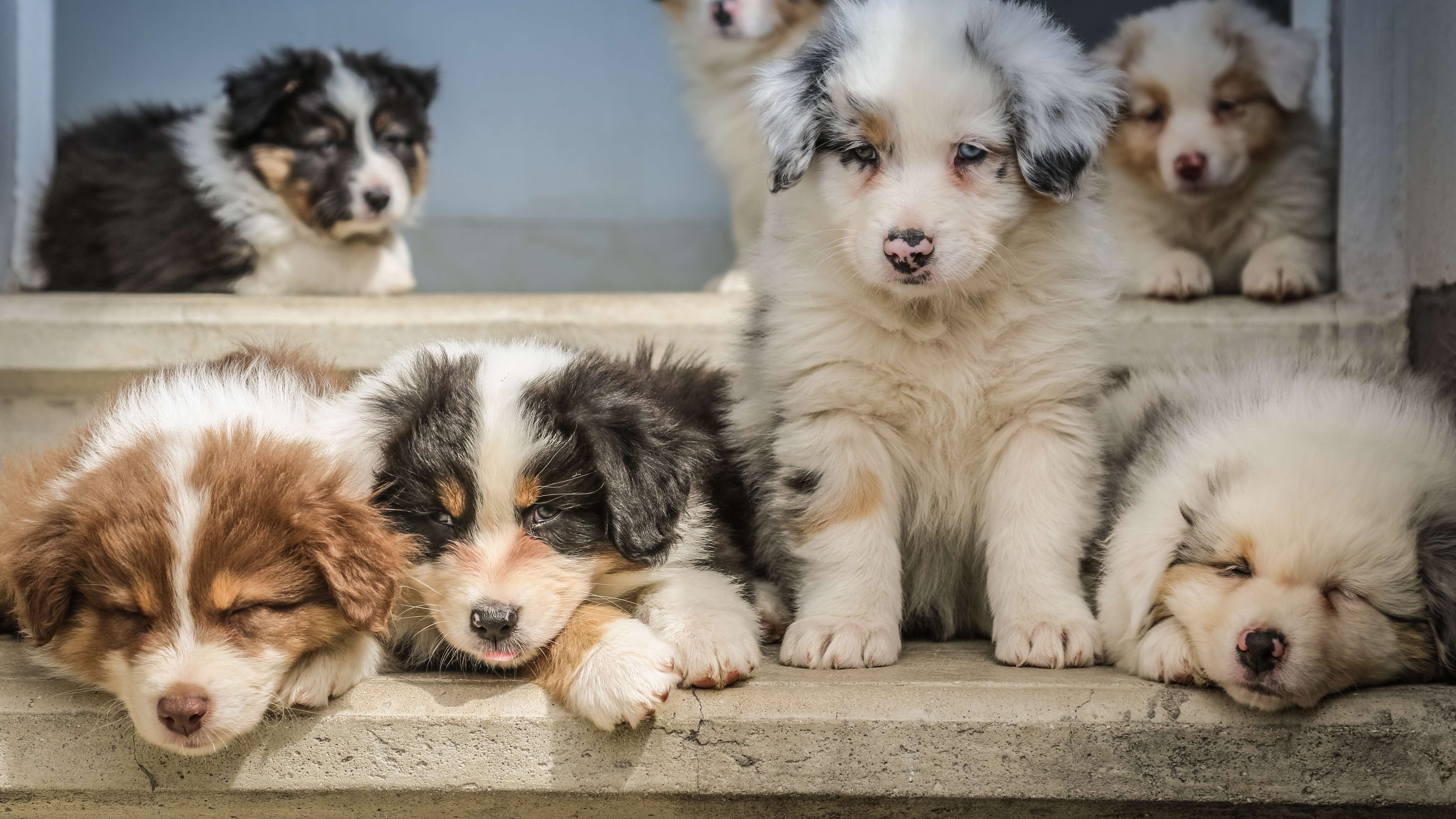 New UK Pet Legislation 'Lucy's Law' to Help End 3rd Party Puppy Mill Sales