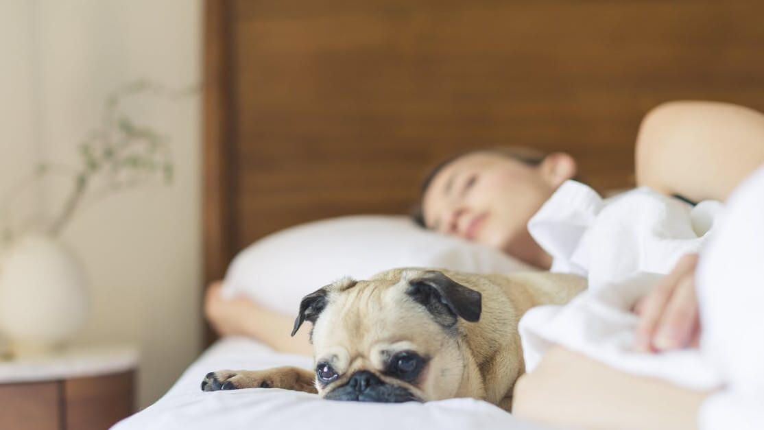 Women Sleep Better Next to Dogs Than People, Says New Research