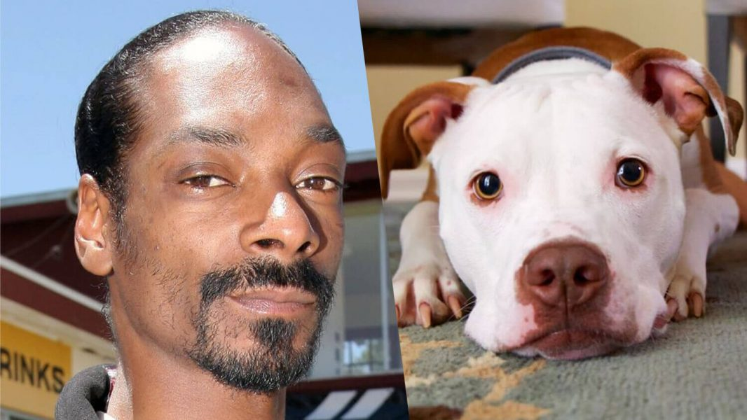 Snoop Dogg Says He'll Adopt Rescue Pit Bull Named in His Honor