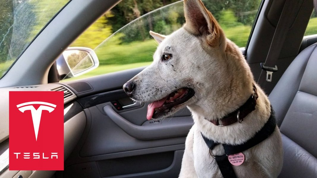 Tesla Created 'Dog Mode' So You Can Leave Pets in the Car Safely