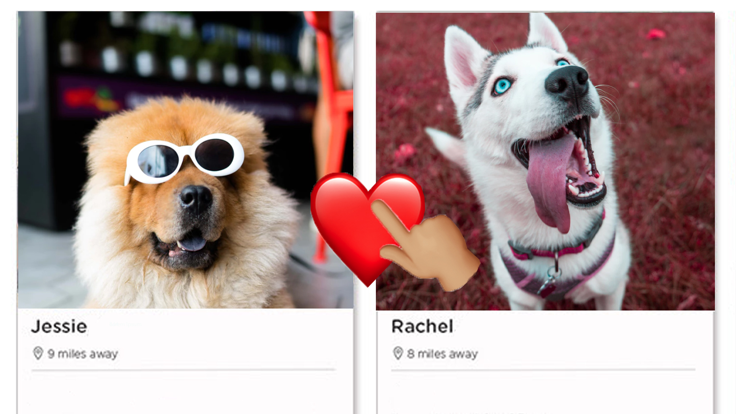 You Can Now Browse a Tinder For Dog Lovers