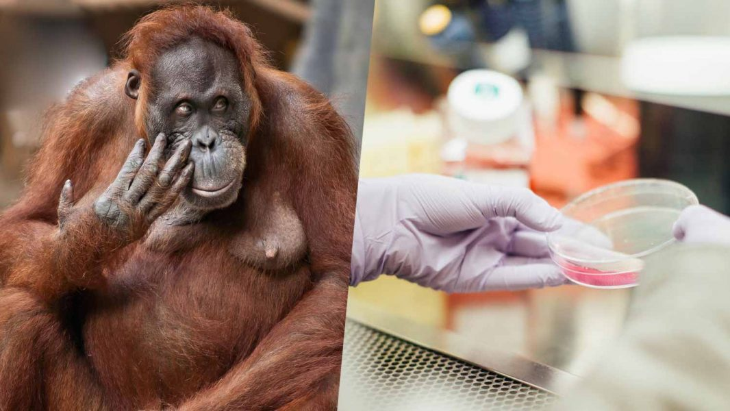 How Scientists Are Growing Meat and Saving Endangered Animals at the Same Time