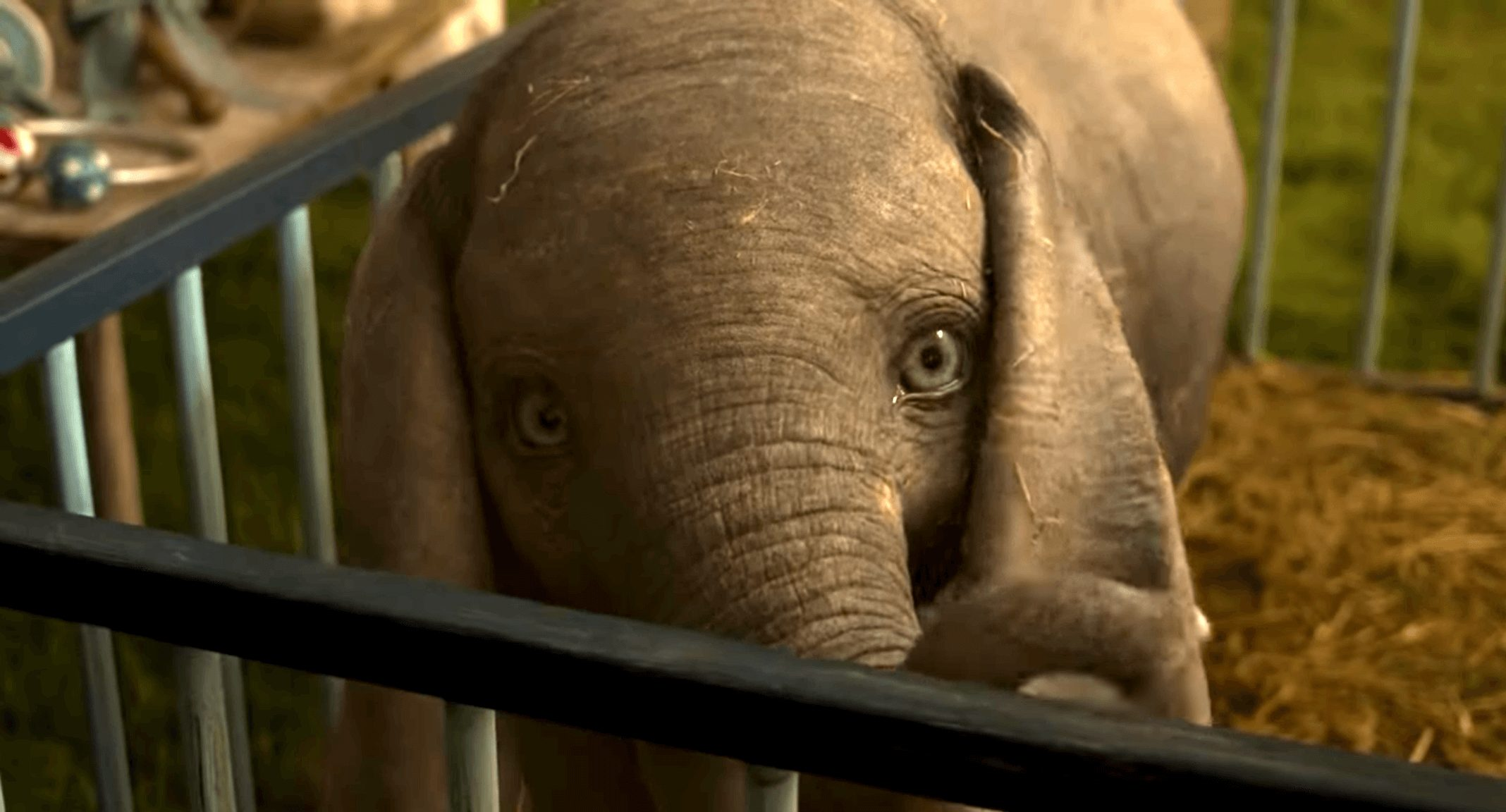 What the 'Dumbo' Movie Can Teach Us About Life As a Circus Animal