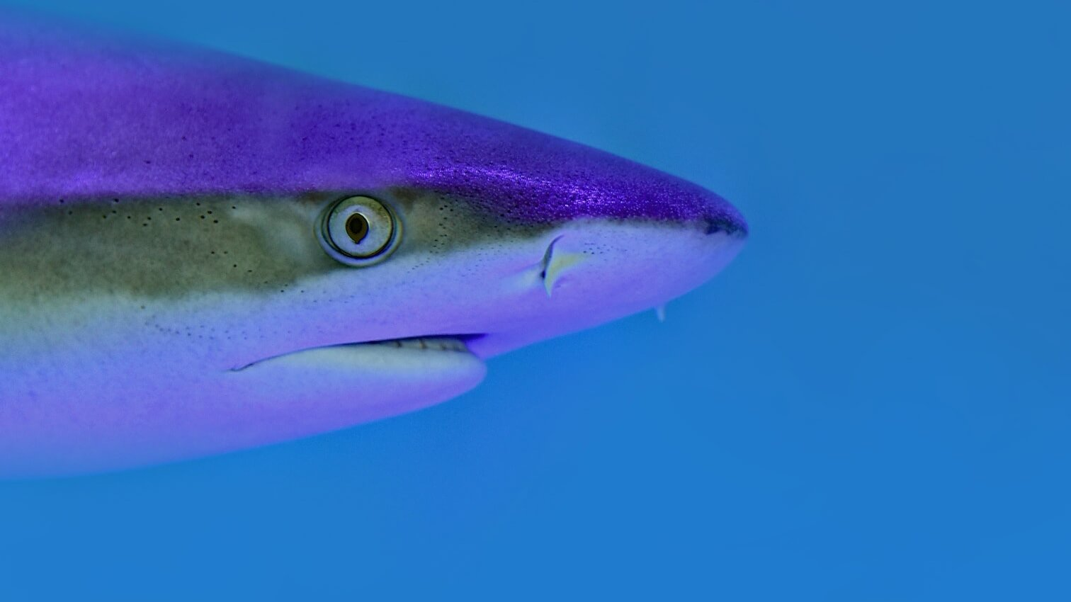 You Can't Legally Kill Great Barrier Reef Sharks Anymore