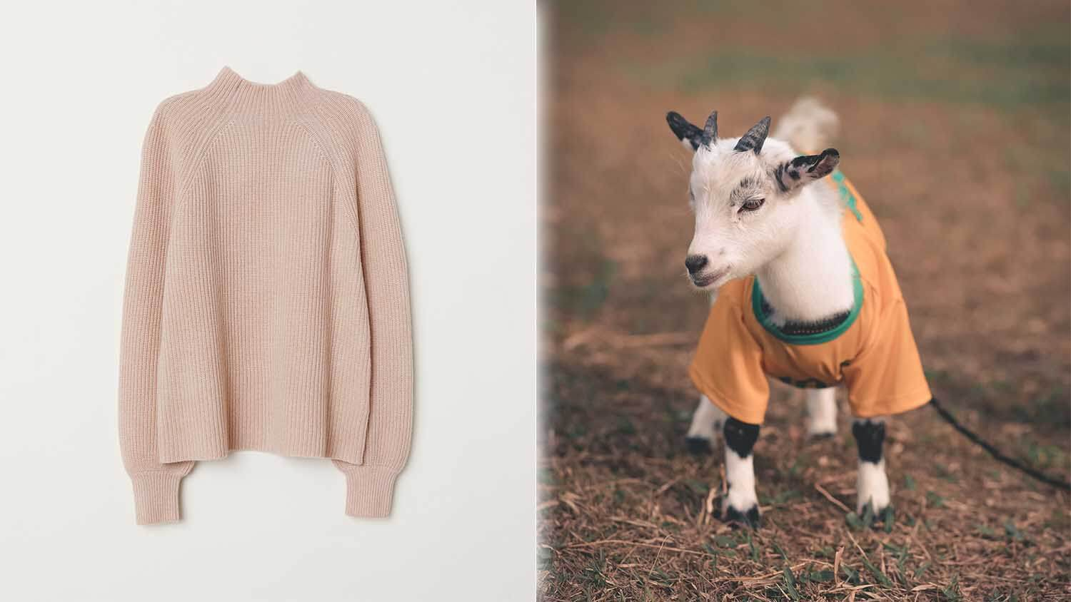 H&M Just Dropped Cashmere From Its Collections