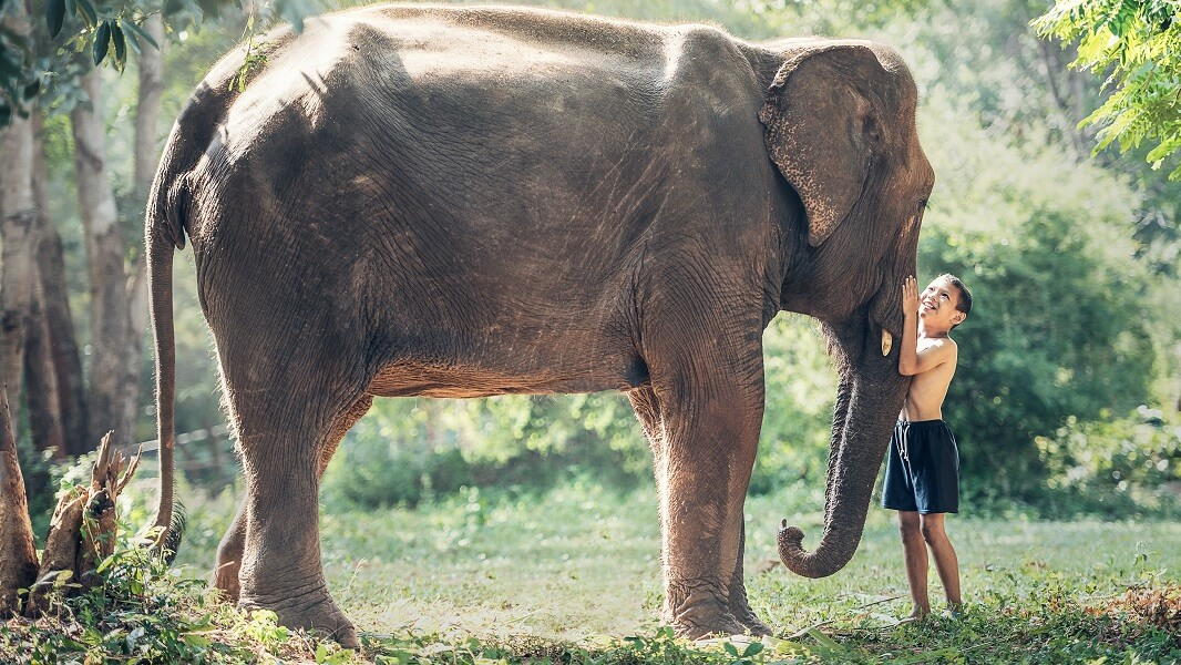 Cambodia Commits to End Elephant Rides By 2020