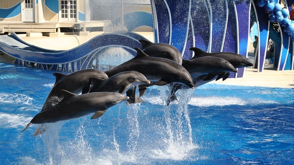 Canada Just Banned Whale and Dolphin Captivity