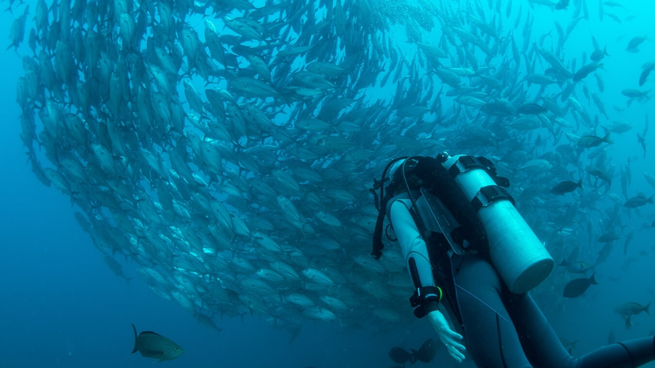 Divers Set World Record Removing 3,200lbs of Ocean Trash