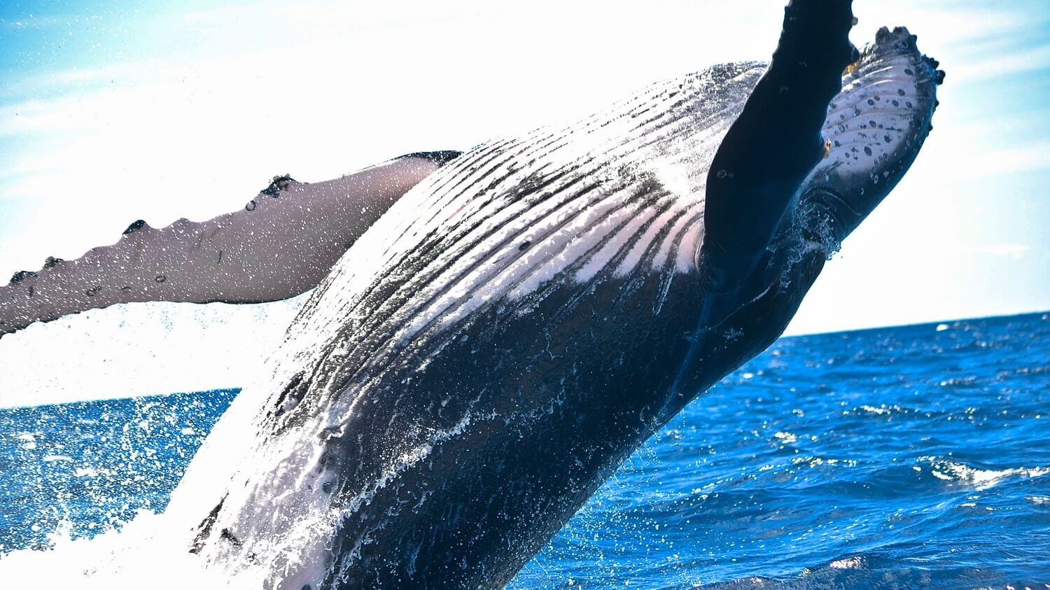 If We Want to Save The Whales, We Must Stop Eating Fish