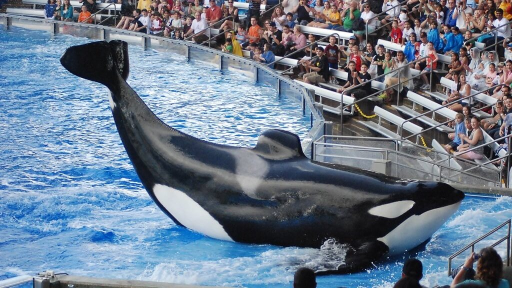 Another Major Travel Giant Just Cut Ties With SeaWorld
