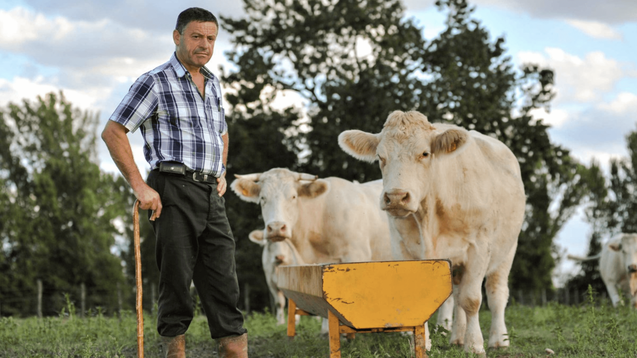 The Struggling Dairy Industry Is Losing One Farmer a Week