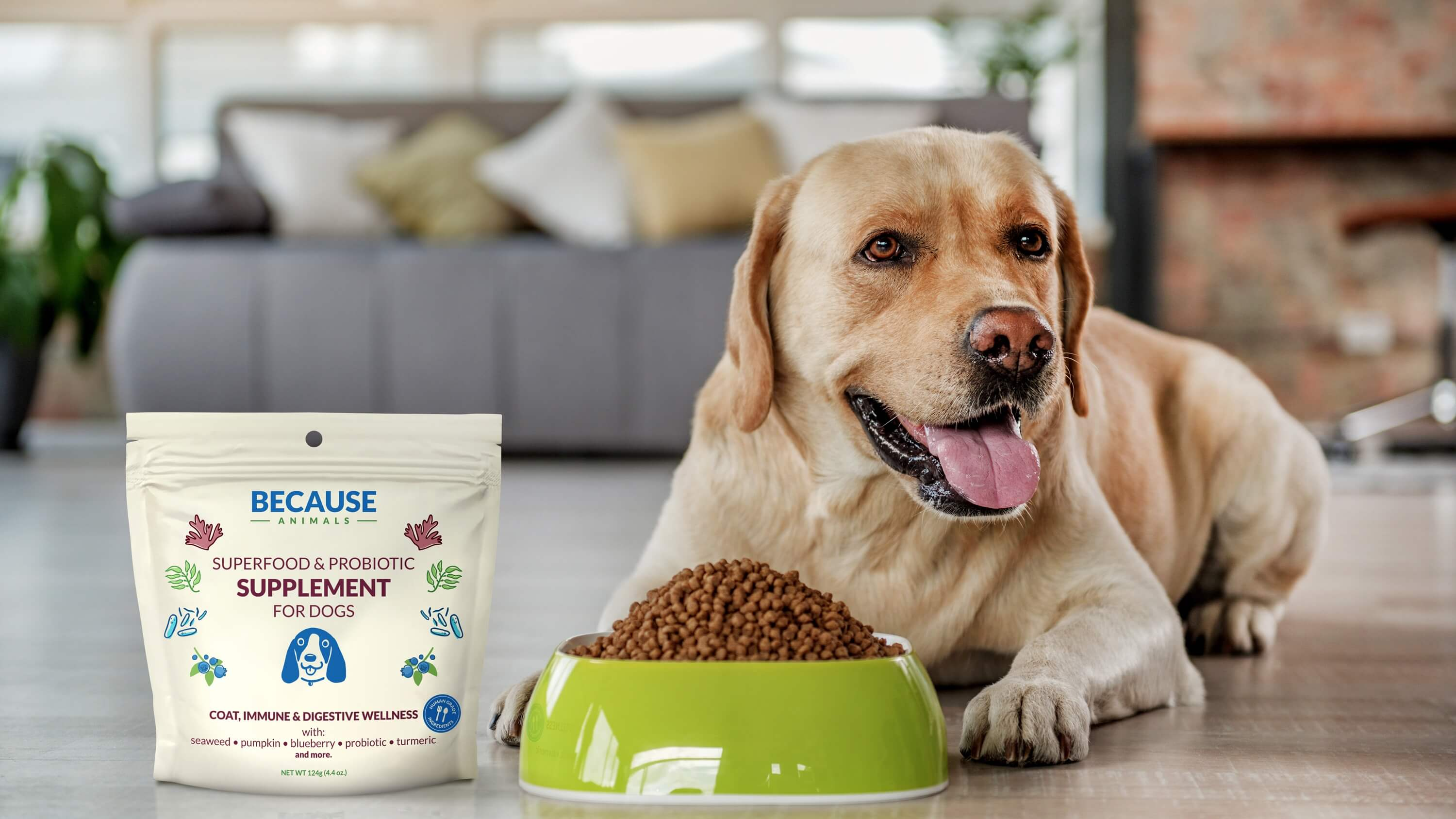 What the Pet Food Industry Doesn't Want You to Know