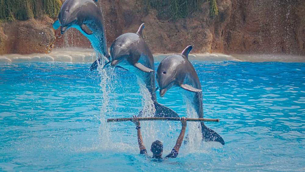 The 'World's Cruelest' Dolphin Circus Just Permanently Shut Down