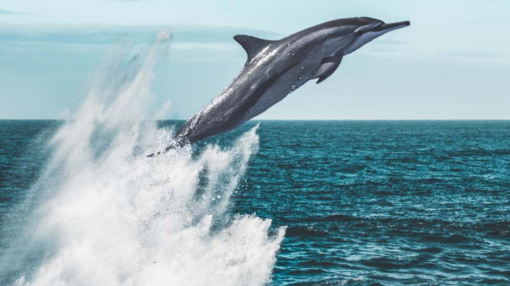 Eating Fish Is Killing Off 90% of Global Dolphin Populations