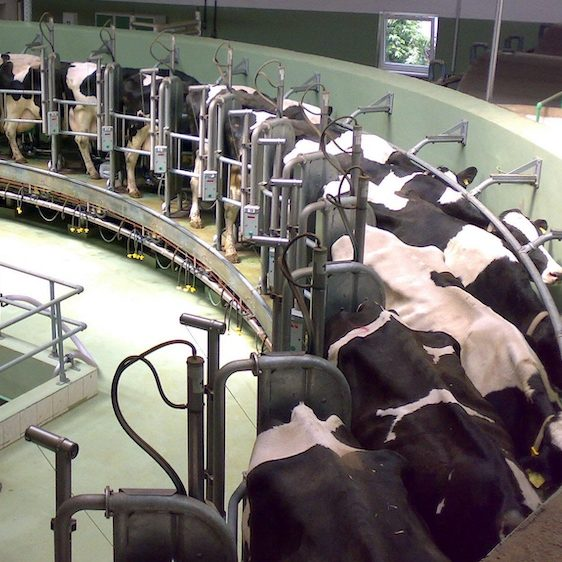 EU to Tighten Factory Farm Rules After COVID-19