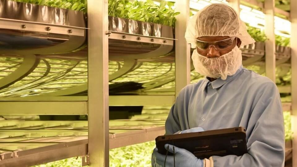 Abu Dhabi Invests $100 Million In a Plant-Based Indoor Farm
