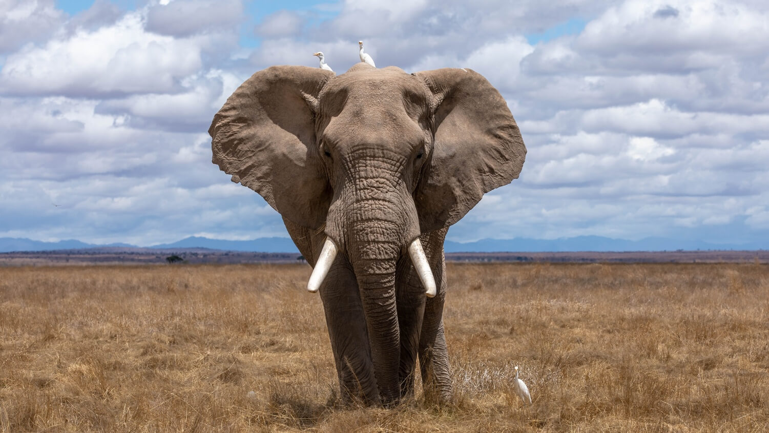 Elephants Are 'Meat' Under Proposed South Africa Legislation
