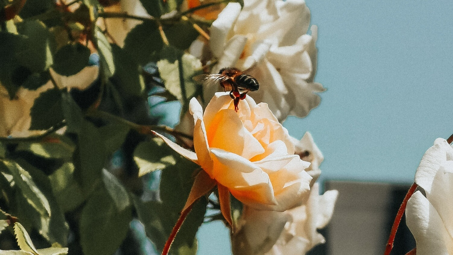 How to Help Protect Bees In Your Garden