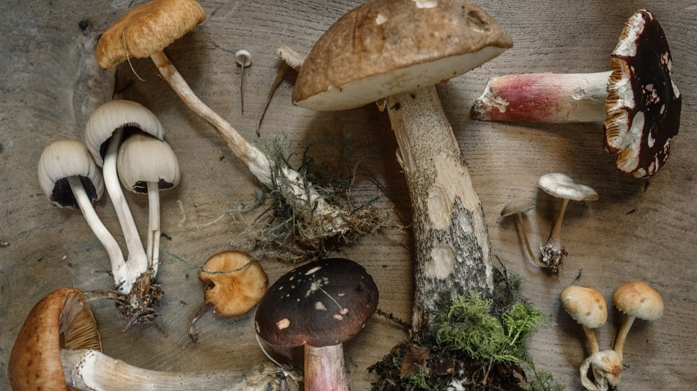 Mushrooms May Be the Best Weapon Against Climate Change