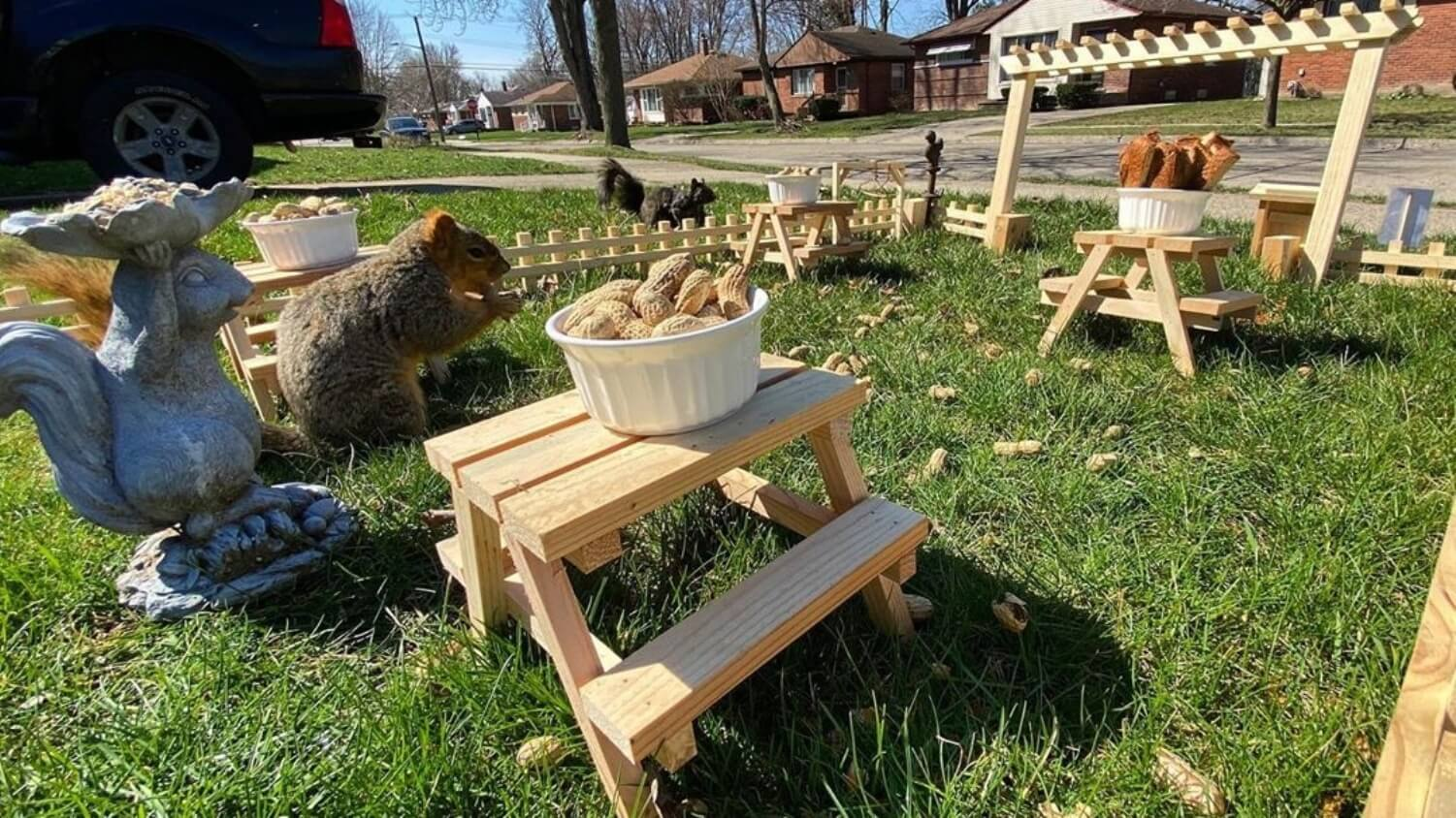 This Man is Building Tiny Restaurants for Squirrels During Quarantine