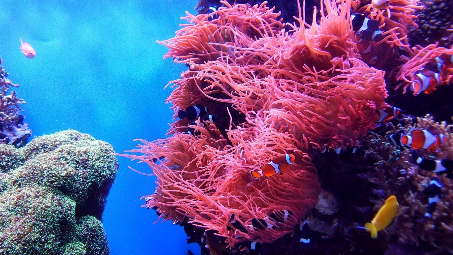 This Australian Tourism Company Is Regrowing the Great Barrier Reef