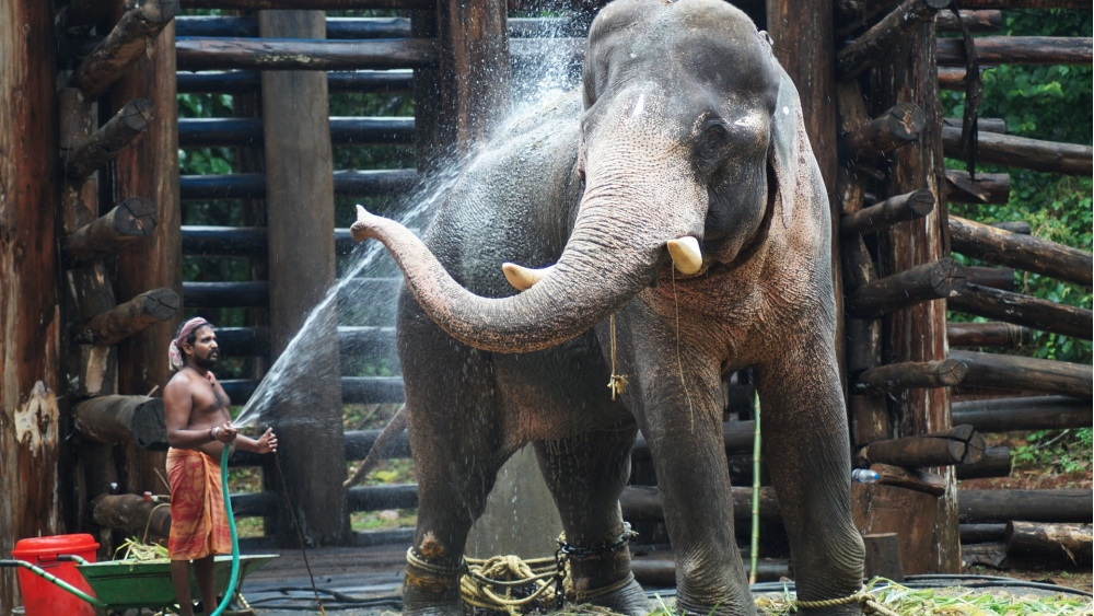 Bollywood Stars Demand Justice for Murdered Elephant