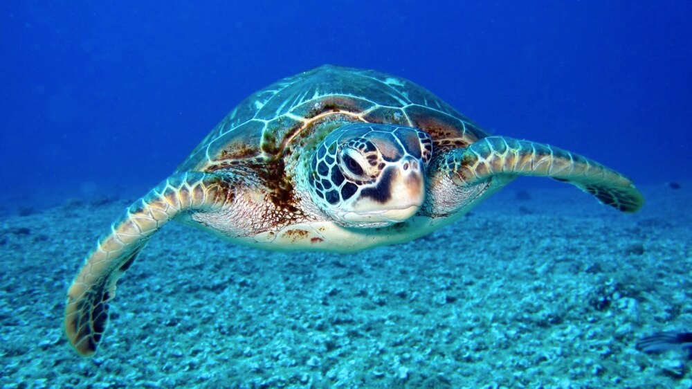 Watch 64,000 Turtles Migrating Near the Great Barrier Reef