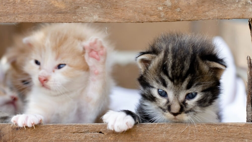 French MP Pushes to End to Animal Abuse With Harsher Penalties