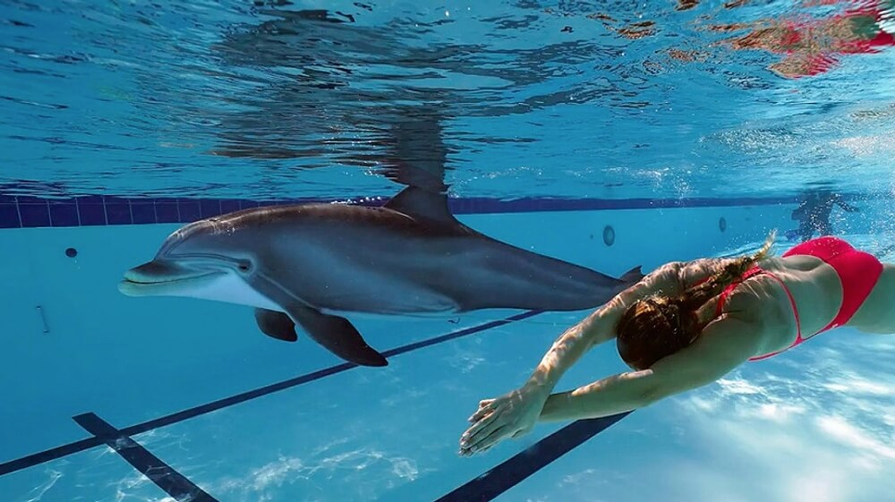 SeaWorld's Captive Animals Could Be Replaced By Robotic Dolphins