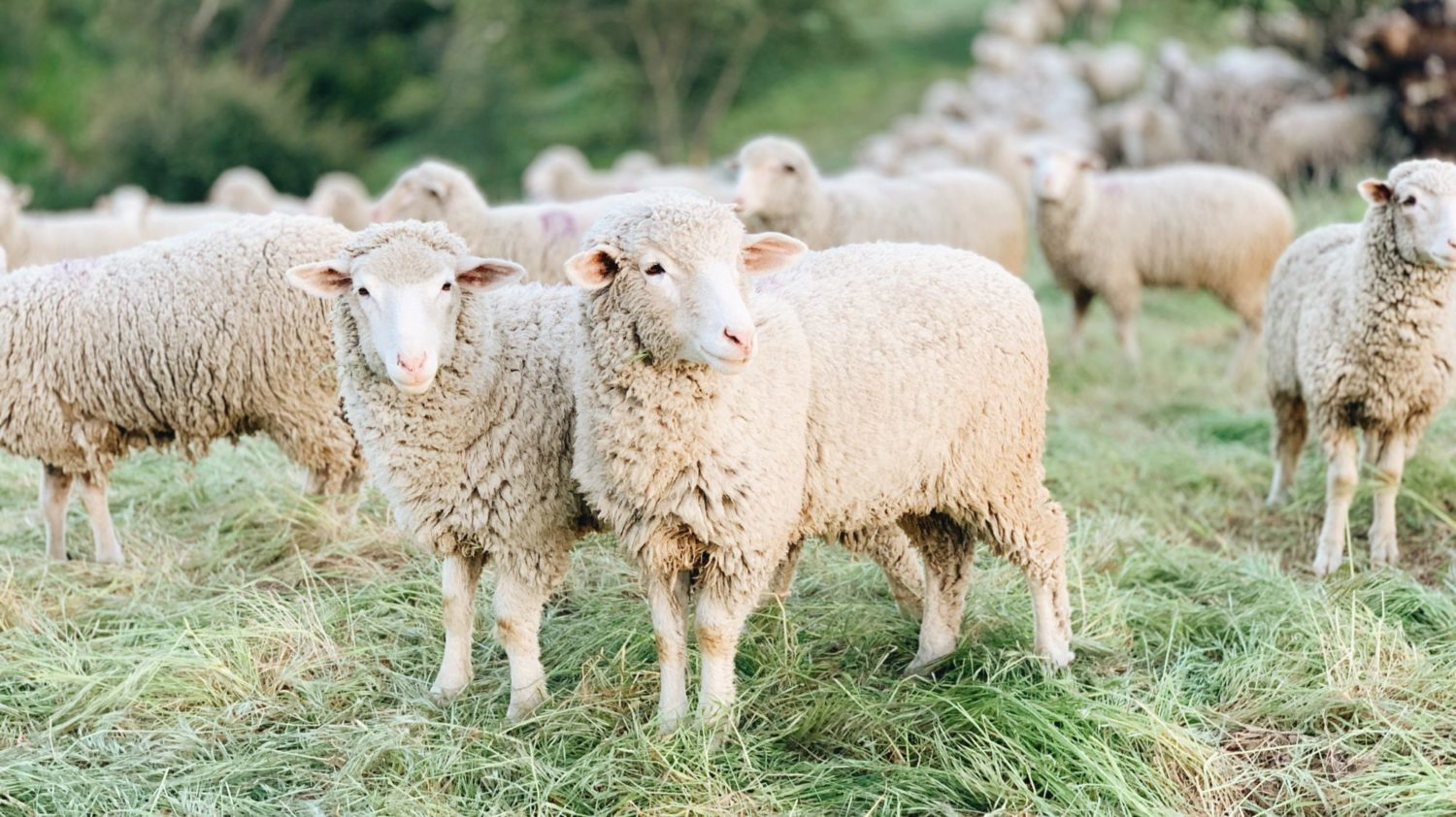 New Plans Will Ban Live Animal Exports in the UK