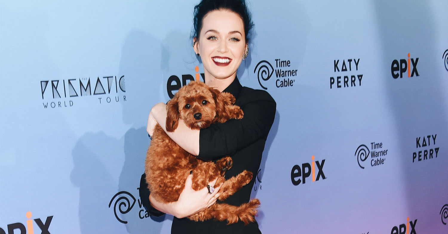 Katy Perry Says She's Going Vegan (And So Is Her Dog)