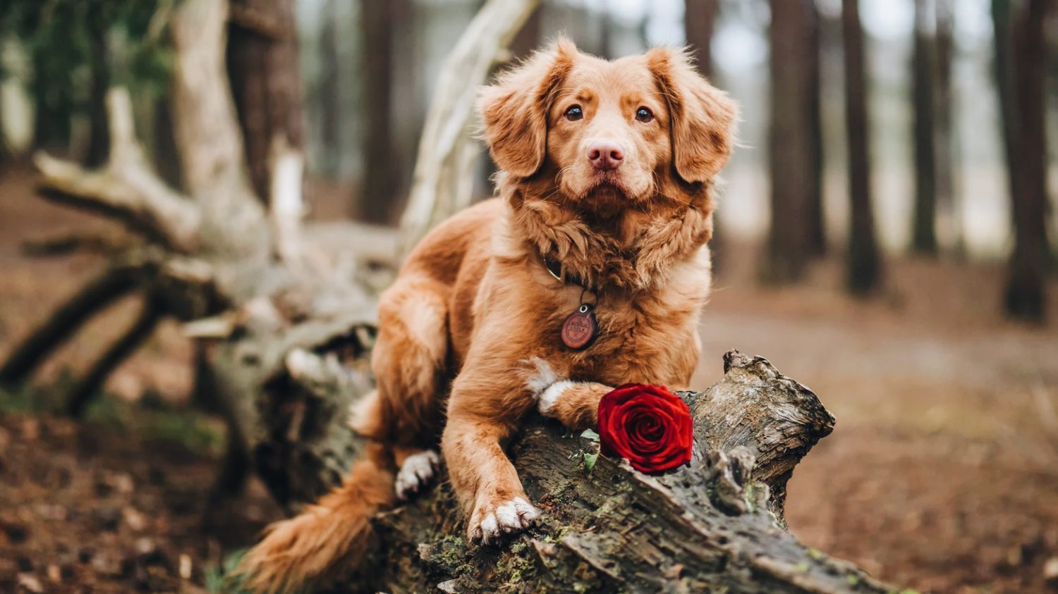 7 Valentine's Day Gifts for Dogs (They're Vegan!)