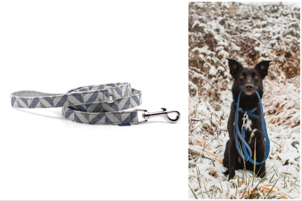 Buy your pup one of these sustainable leashes. | Project Blu