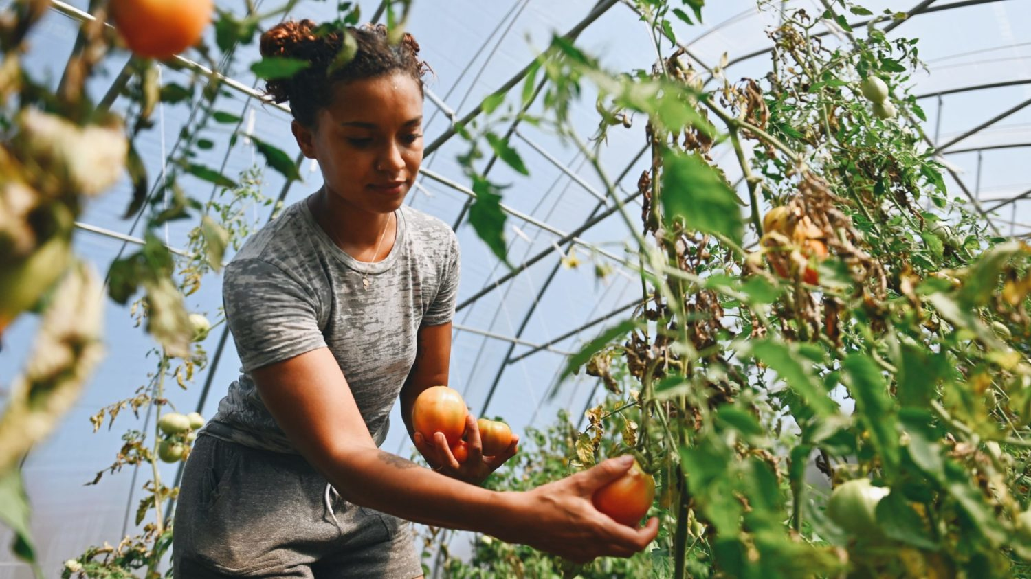 Biden's Support for Black Farmers Could Tackle Both Climate Change and Land Equity