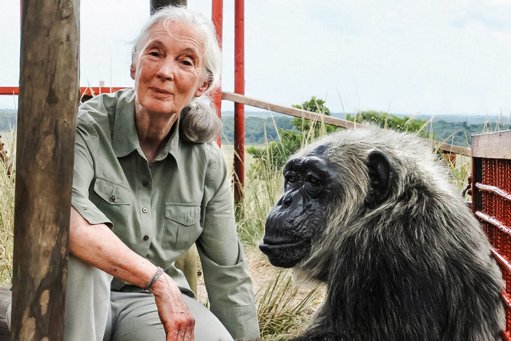 Jane Goodall on 60 Years of Chimps and Conservation
